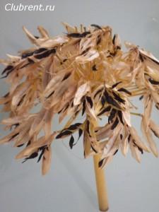 агапантус