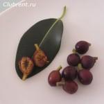 фикус ржаволистный плоды