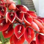 растения и цветы средиземноморья